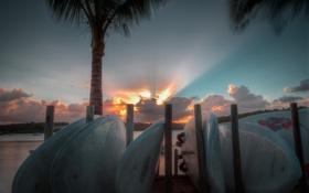 Картинка пляж, небо, пейзаж, пальмы, океан, рассвет, доски для серфинга