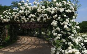 Картинка розы, арка, беседка