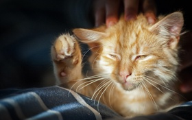 Картинка кот, рыжий, прищур