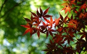 Обои листва, ветка, блики, макро