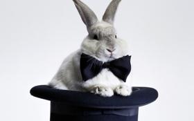 Обои символ 2011 года, Заяц, шляпа