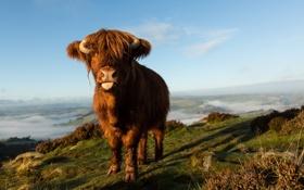 Обои природа, фон, корова