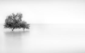 Картинка деревья, туман, фон