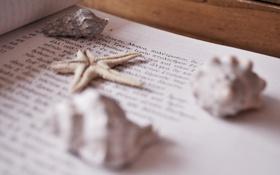 Обои макро, текст, буквы, звезда, ракушки, морская