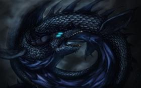 Обои черный, дракон, кольца, арт, пасть, хвост