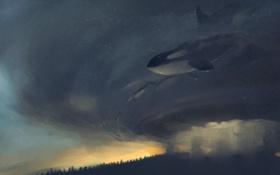 Обои кит, art, касатка, orca