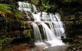 Обои лес, ручей, камни, водопад, Австралия, пороги, Tasmania