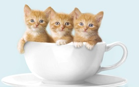 Обои кружка, котята, рыжие котята