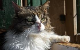 Картинка кошка, кот, усы, морда, свет, тень