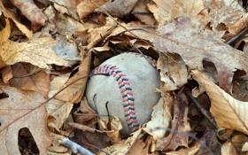 Обои листья, макро, мяч