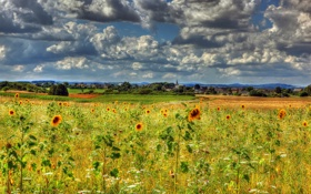 Картинка поле, небо, облака, цветы, тучи, подсолнух