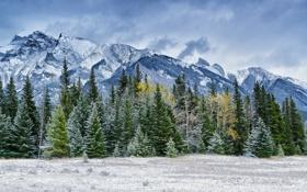 Обои зима, лес, снег, деревья, горы, хвойные