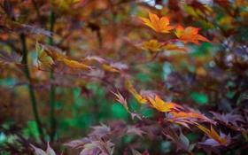 Обои ветки, природа, листва