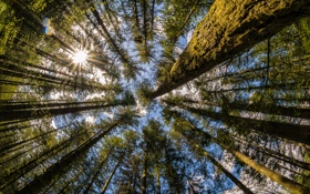 Обои Washington, лес, природа, деревья, Moulton Falls