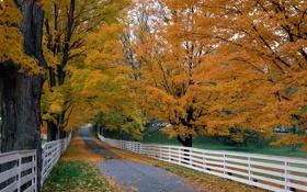 Картинка дорога, осень, деревья, листва, забор