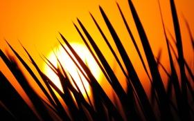 Обои закат, иголки, желтый, куст, листки, sunset, сардиния