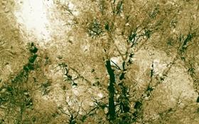 Обои капли, осень, ветки, пасмурно, вода, дождь, деревья