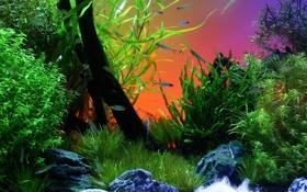 Картинка рыбки, рыбы, аквариум, растения