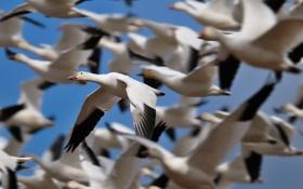 Картинка небо, птицы, природа