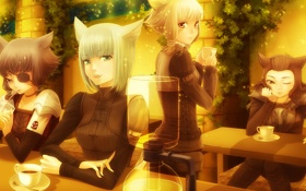 Картинка кошки, Final Fantasy XIV, The Miqo'te