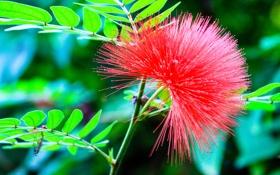 Картинка стебель, цветок, экзотика, растение, лист
