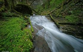 Картинка лес, трава, река, поток
