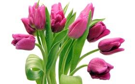 Обои букет, тюльпаны, розовые, капельки воды