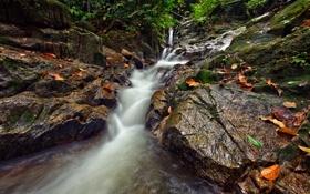 Картинка камни, осень, скалы, поток, лес, ручей, листья