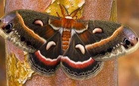 Картинка дерево, узор, бабочка, цвет, крылья, мотылек