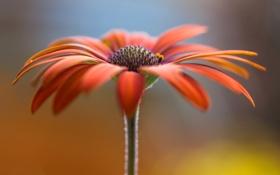 Обои цветок, растение, лепестки, стебель