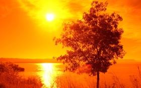 Обои Солнце, Трава, Закат, Дерево, Облака, Вода, Берег
