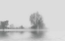 Картинка вода, деревья, туман, фон, силуэты