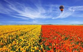 Обои пейзаж, цветы, природа, маки, маковое поле