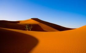 Обои песок, пустыня, небо, барханы, куст, дюны