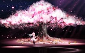 Обои небо, девушка, звезды, дерево, ветер, лепестки, сакура