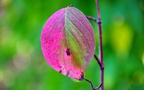 Обои природа, лист, цвет, ветка