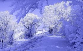 Картинка тень, дом, домик, тропинка, деревья, мороз, иней