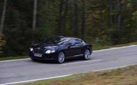 Картинка Bentley, Continental, Дорога, Синий, Лес, GTC, В движении