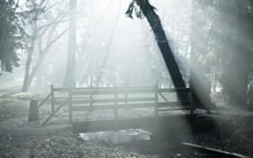 Картинка пейзаж, мост, туман, парк