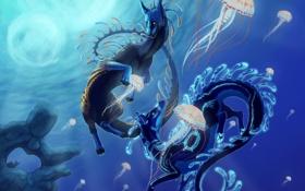 Картинка рыбы, медузы, существа, подводный мир