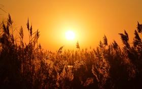 Обои закат, природа, травы