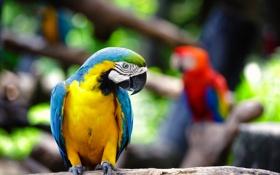 Обои размытость, яркий, попугаи, фокус