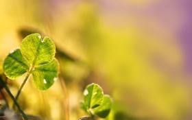Обои цвета, лучи, свет, лист, растение, солнечно, яркость