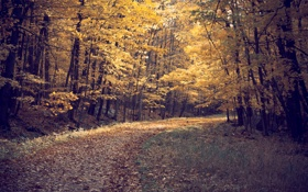 Обои дорога, осень, лес, листья, деревья, пейзаж, природа