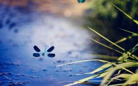 Картинка полет, растение, стрекоза