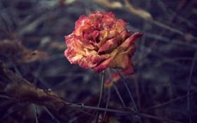 Картинка цветок, ветки, увядание