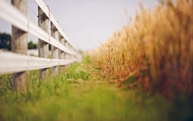Картинка лето, природа, забор