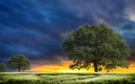 Картинка небо, трава, солнце, облака, деревья, листва, Поле