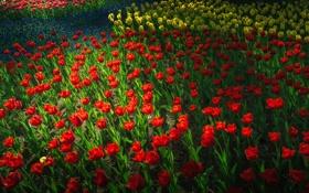 Картинка парк, весна, сад, тюльпаны, клумба