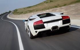 Картинка дорога, белый, скорость, Lamborghini, суперкар, вид сзади, Murcielago